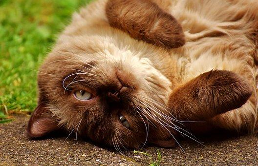 De Vrolijke Huiskat