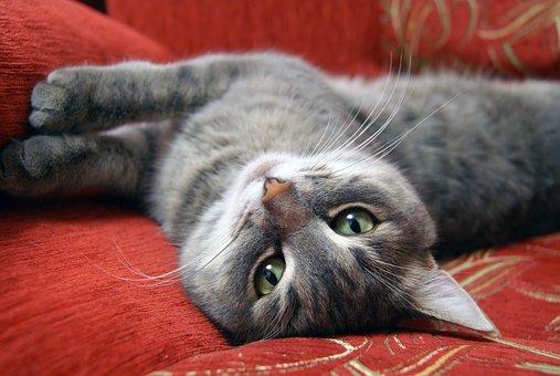 Advies kattengedragsdeskundige